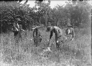 Girl Guides collecting herbs, June 1918' courtesy of the Imperial War Museum (www.iwm.org.uk ) © IWM (Q 27917)